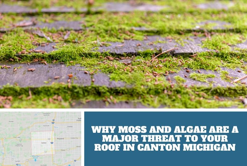 Why Moss and Algae Are A Major Threat to Your Roof in Canton Michigan