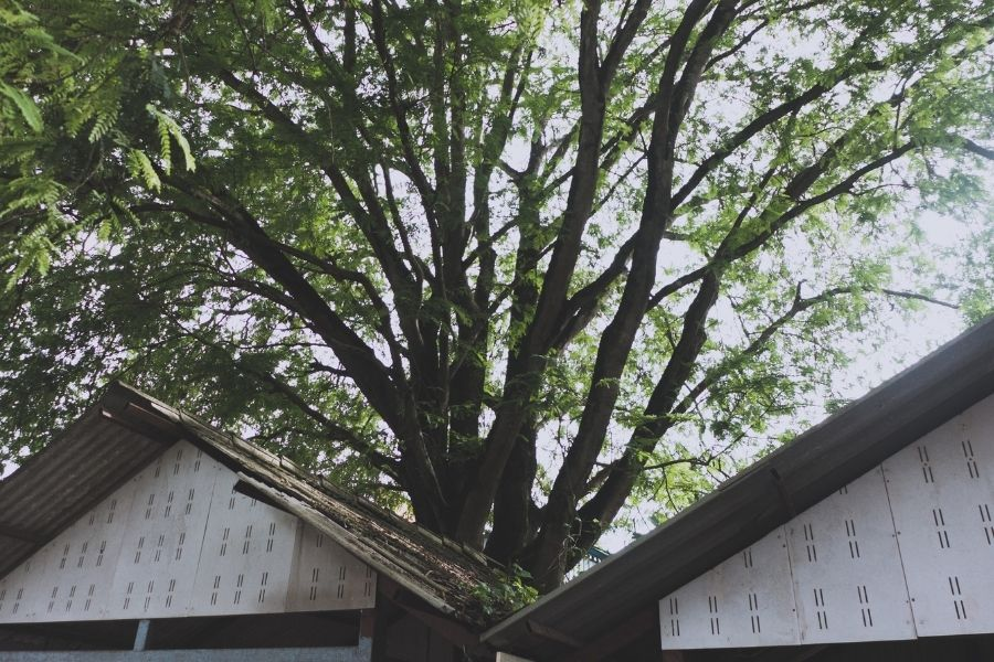 Are Tree Branches Dangerous To Your Roof in Ann Arbor Michigan?